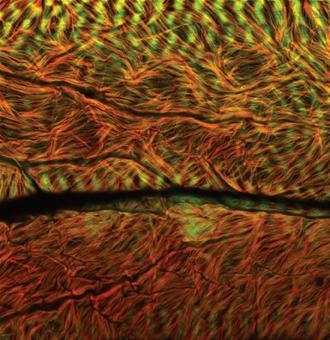 揭秘显微镜下的美丽细胞(组图)(2)