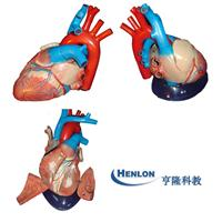 心臟解剖模型 GD-0321B