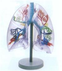 透明肺段模型 GD/A13009