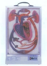 上等電動心髒搏動與血液循環模型 GD/A16004