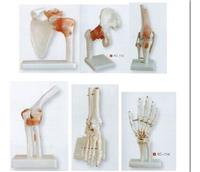 關節模型(肩、髖、膝、肘、腳、手) KAH/XC109-KAH/XC114