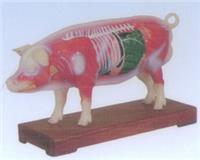 豬體針灸模型