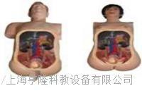 高仿真泌尿內鏡技能訓練人體模型 HL-MN100