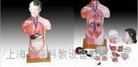 女性軀干模型15件 42CM KAH/A202B