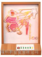 頭麵部自主神經分布電動模型