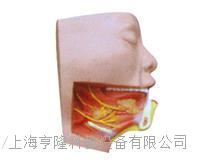 下頜下三角解剖模型 KAH2121-1
