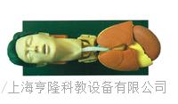 成年人氣管插管訓練仿真模型 KAH-X1006