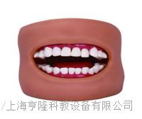 上等口腔清潔模型2(帶臉頰) KAH-11C