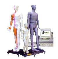 多媒体人体按摩穴位电子模型