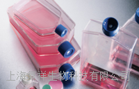 人脐静脉血管内皮细胞 HUVEC[HUV-EC-C]