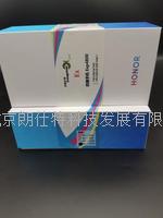 華為防爆智能手機 EXP4800