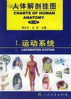 人體解剖掛圖-運動系統(51張) 紙制