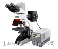BM2000熒光生物顯微鏡