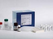 Hsp-40试剂盒,小鼠热休克蛋白40Elisa试剂盒