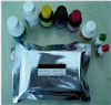 鸡碱性成纤维细胞生长因子(bFGF)ELISA检测试剂盒说明书
