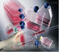 KMB-17细胞素尔细胞 KMB-17细胞
